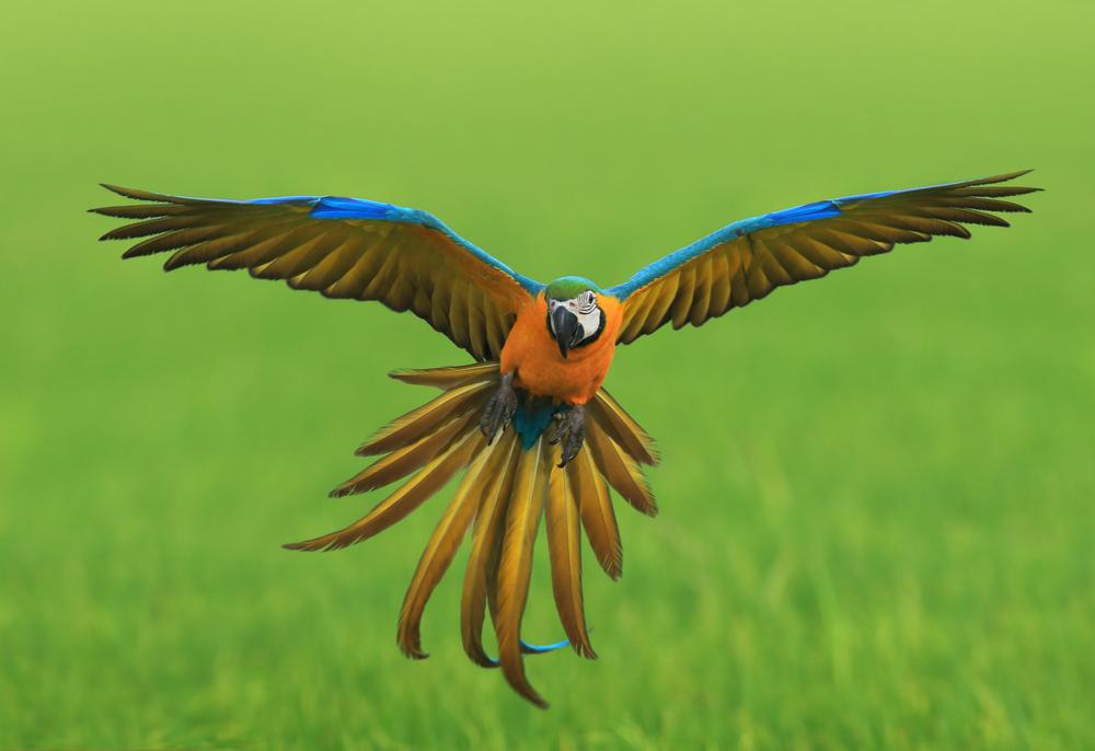копирование механики крыльев птиц лежит в основе разработки большинства современных летательных средств