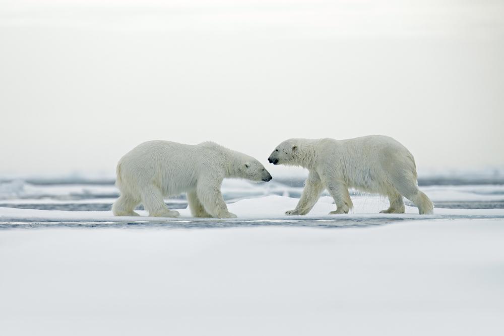 Диалог в Арктике