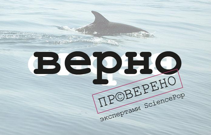 Дельфины считаются одними из самых умных животных