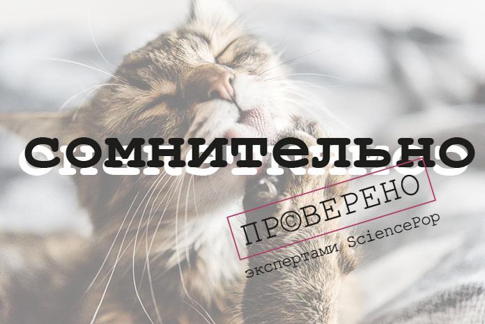 Кошки лечат переломы