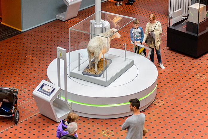 Овечка Долли в Национальном музее Шотландии.