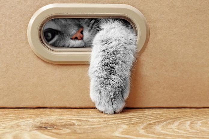 Популярность кота Шредингера
