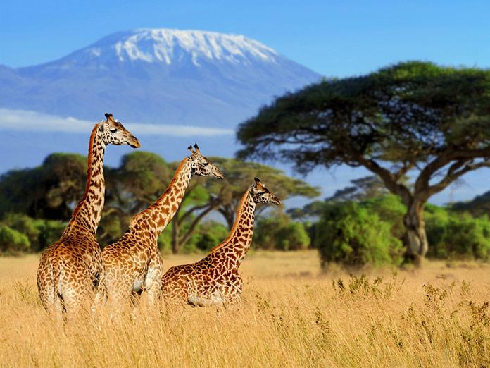 Гора Килиманджаро, Национальный парк Кении.