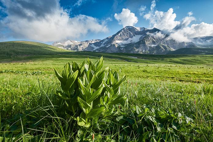 Горная долина и альпийский луг, Лагонаки, Россия.