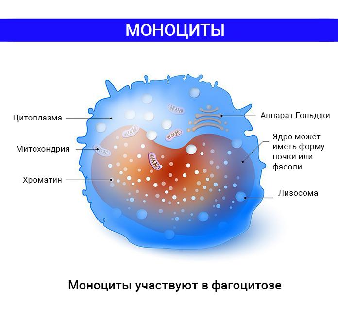 Устройство моноцита
