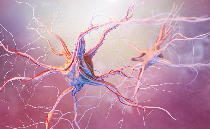 нейроны и нервные клетки
