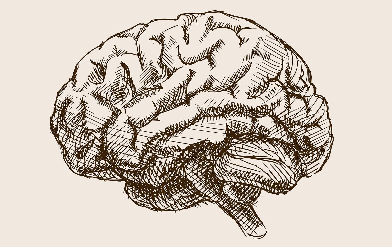 Монохромное изображение головного мозга