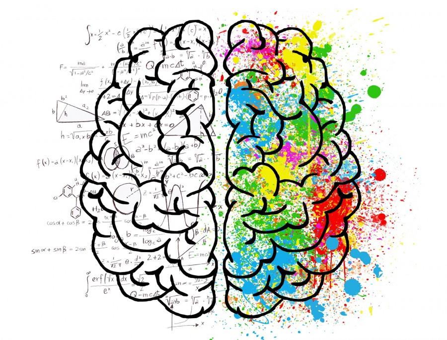 мозг, полушария