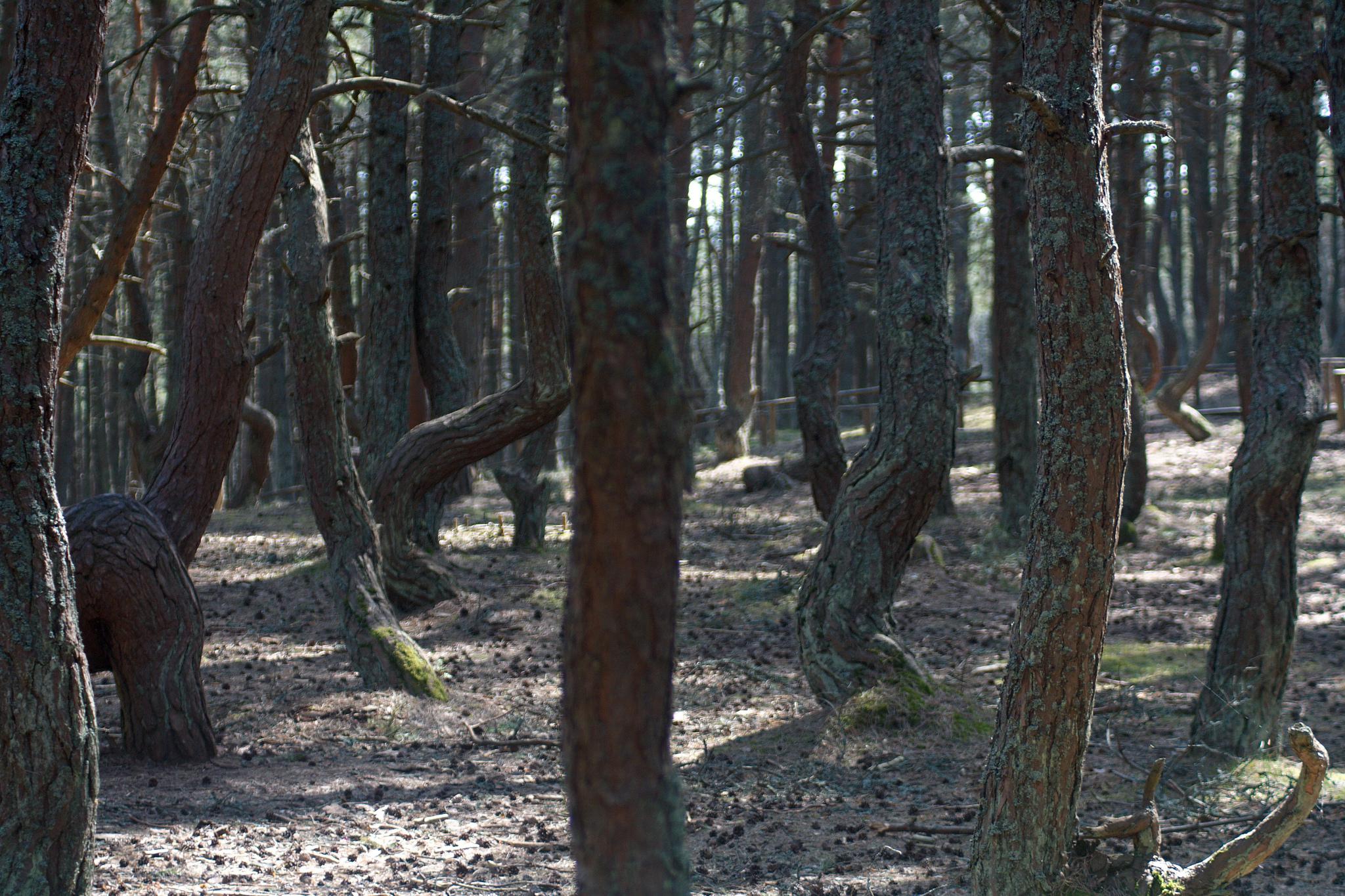 Грыфинский лес