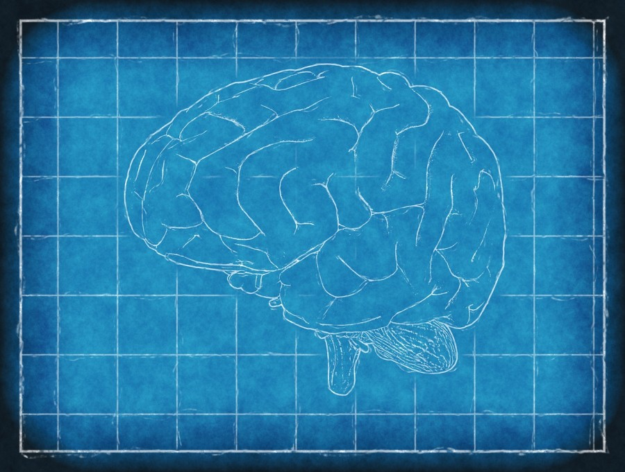 мозг, рисунок