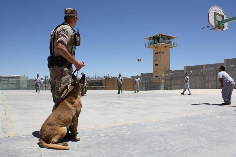 тюрьма, собака