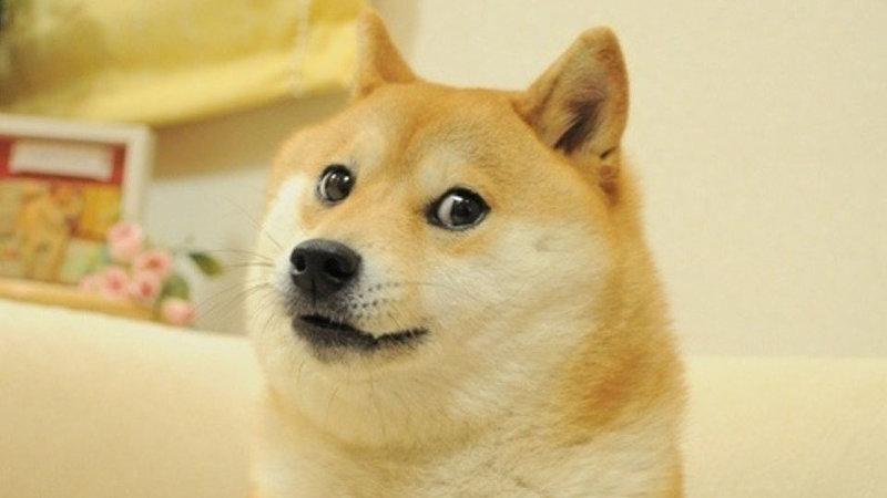 Doge (1)