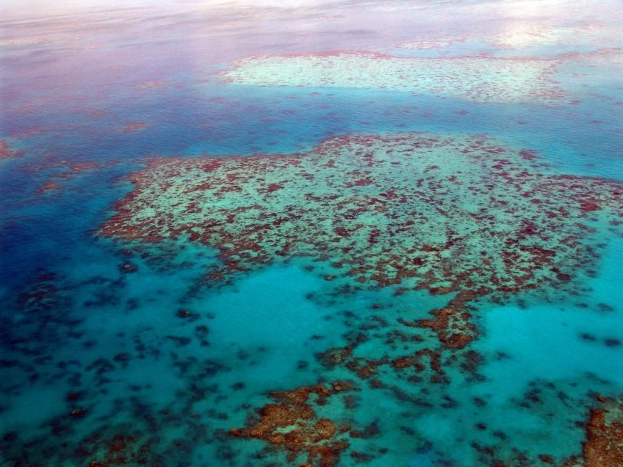 коралловые рифы, кораллы
