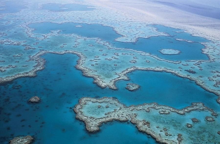 кораллы, коралловые рифы