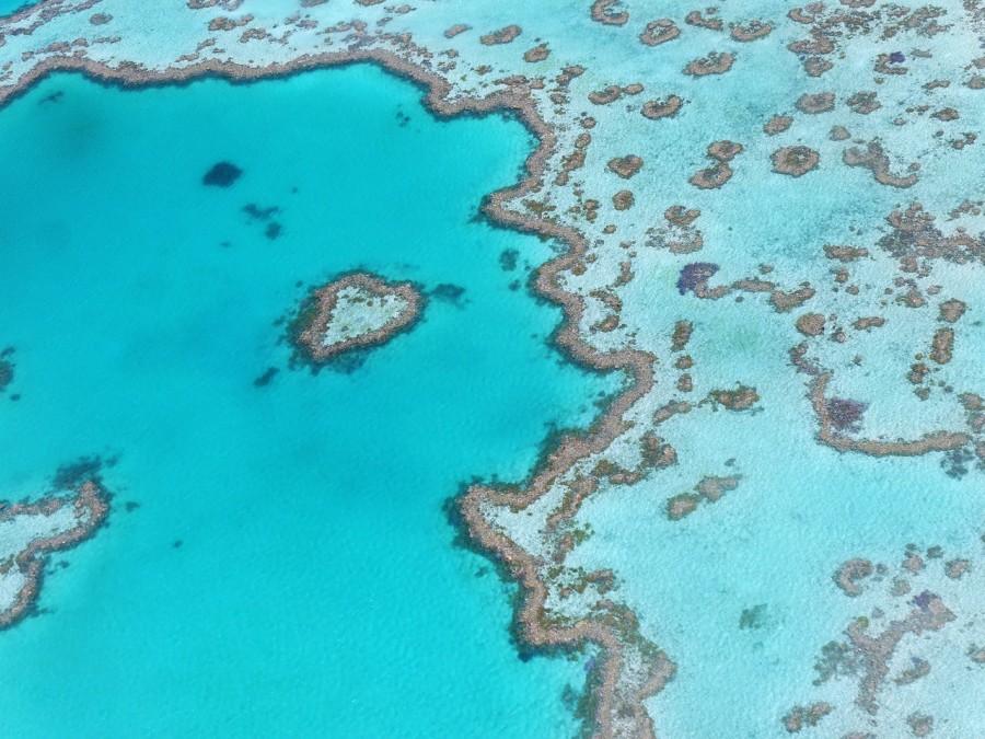 кораллы, риф