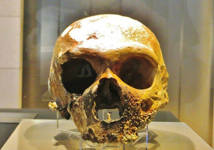 неандерталец, череп