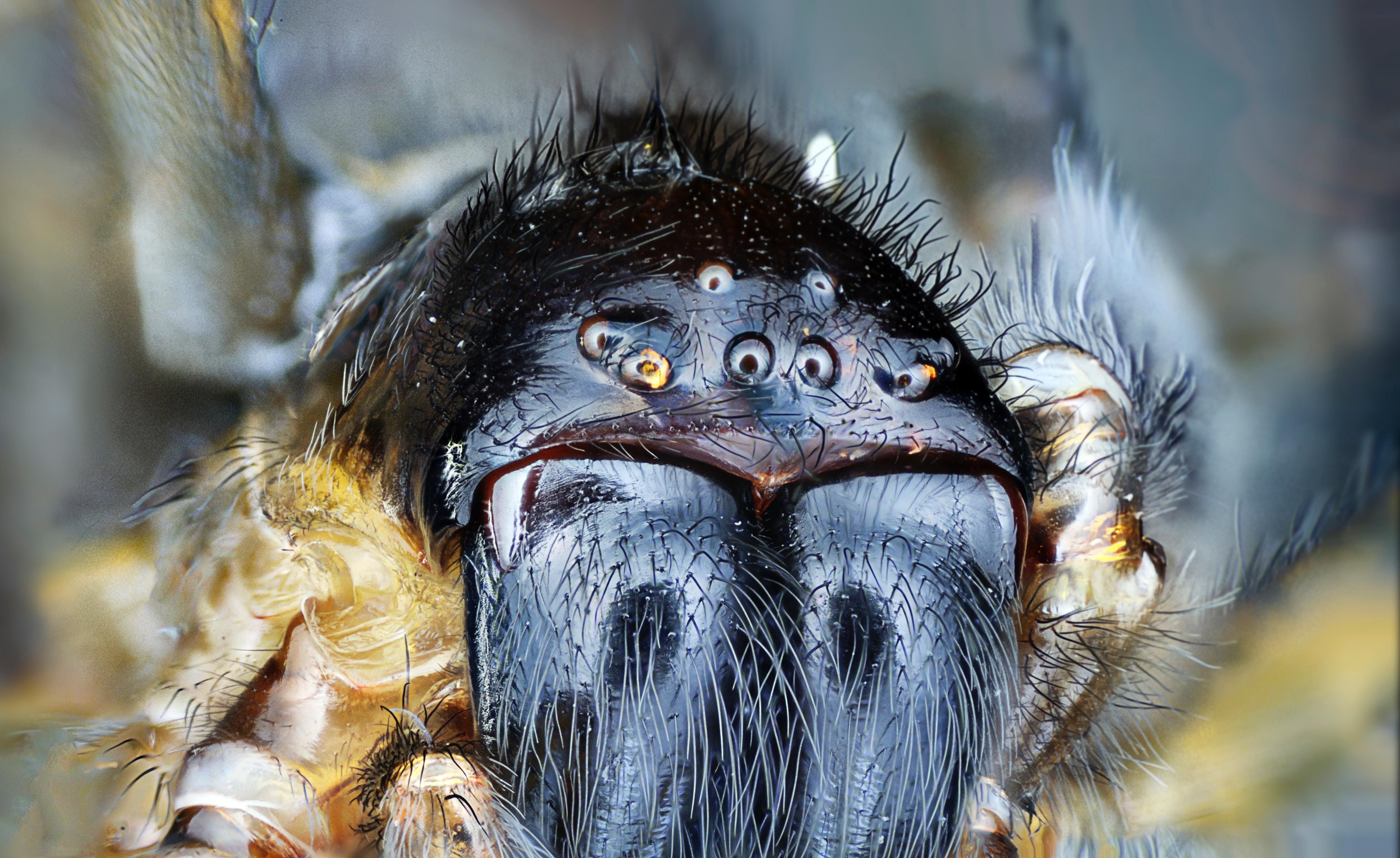 пауки, страх, арахнофобия