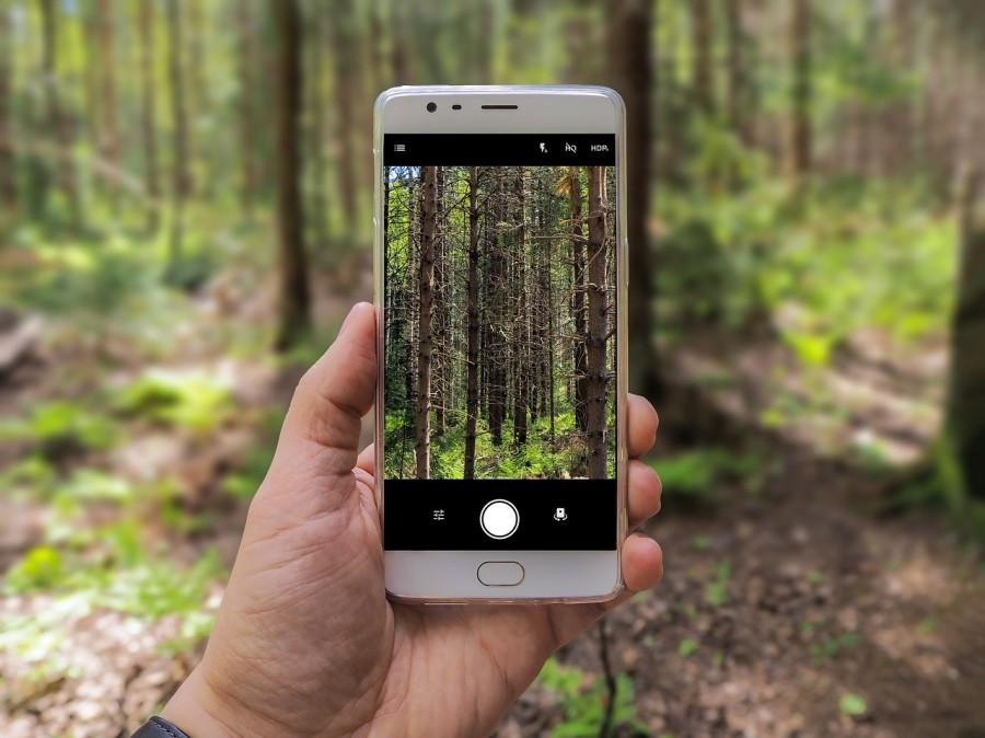 лес, телефон, фотография