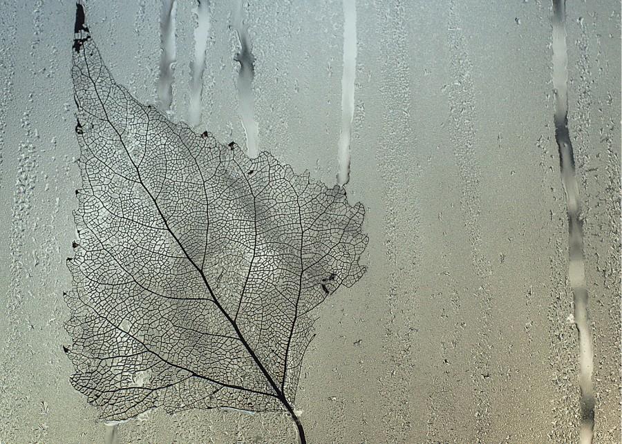 стекло, лист, капли