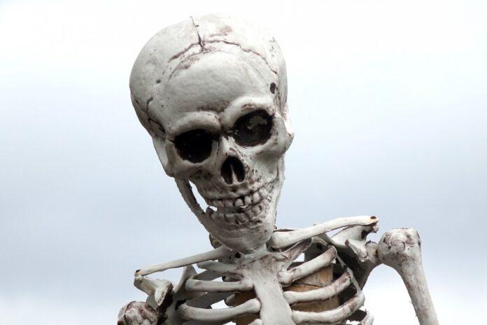 череп, скелет, нежить