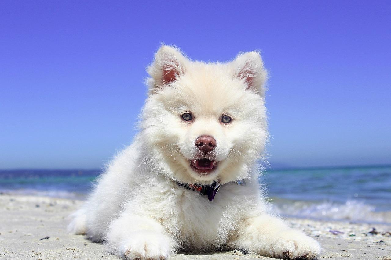 собака, щенок, пляж