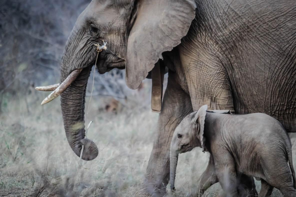Слон, слоненок, сирота