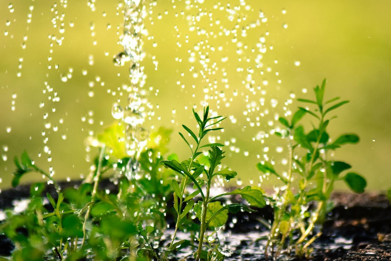 полив, вода, растения