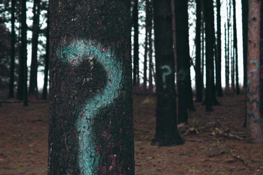 вопрос, деревья, знак