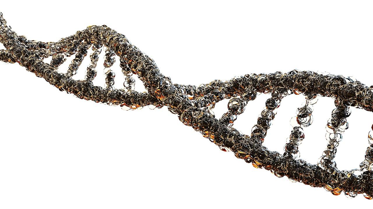ДНК, нить, генетика