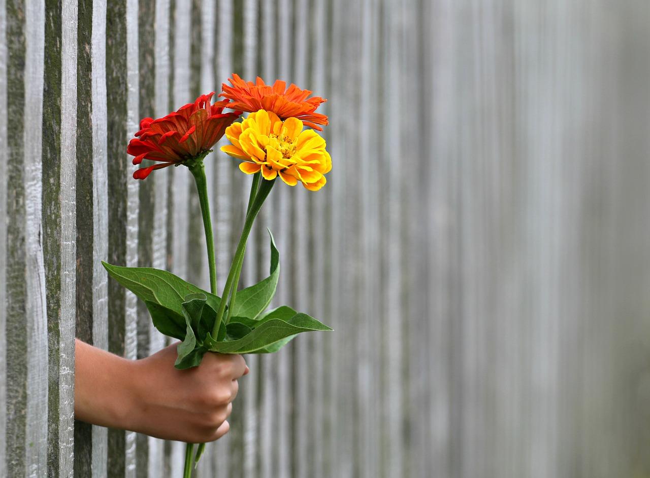 букет, цветы, рука