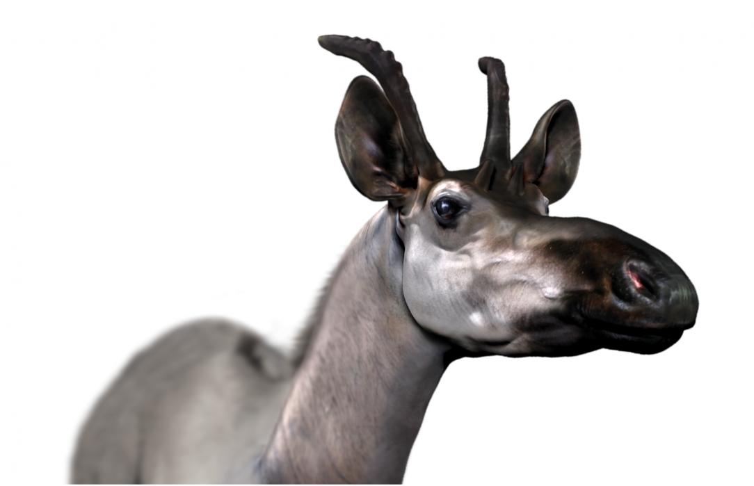 Древний жираф, Деценатерий