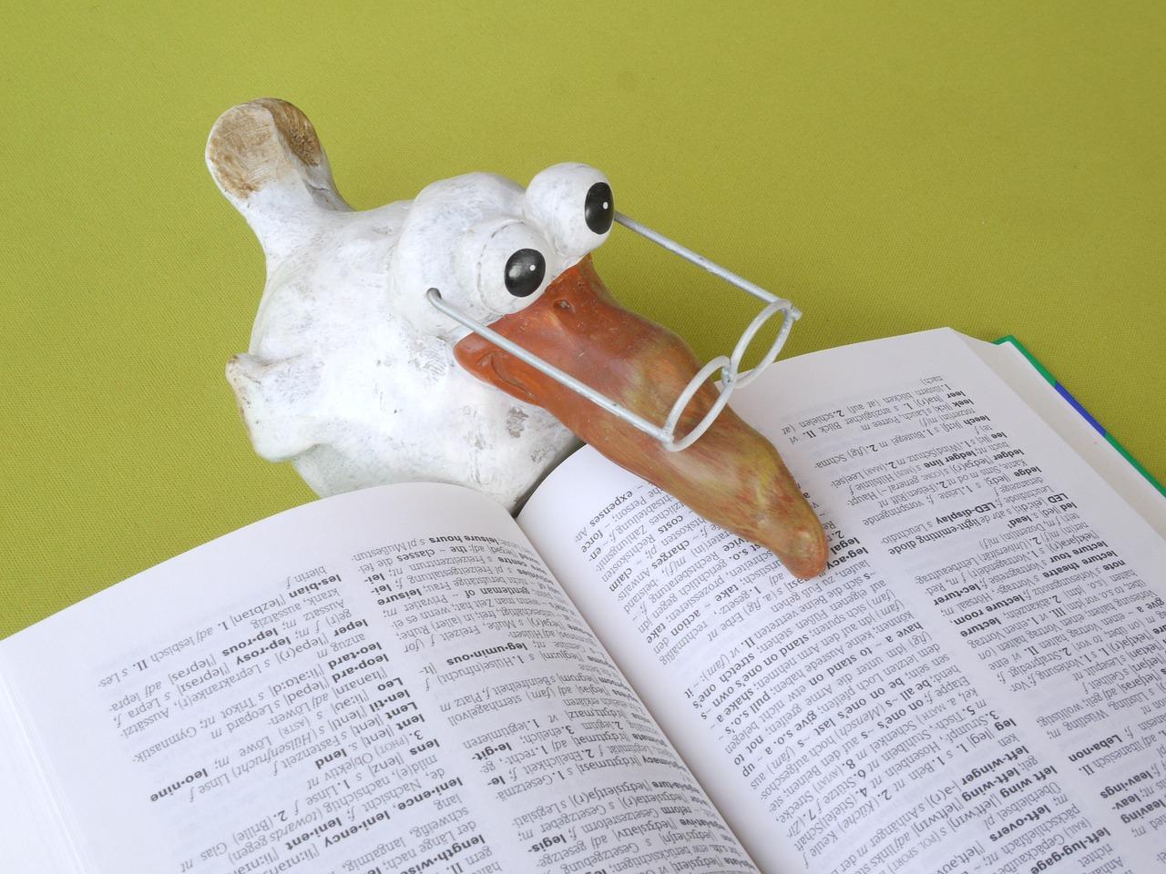 словарь, учить, очки, птица