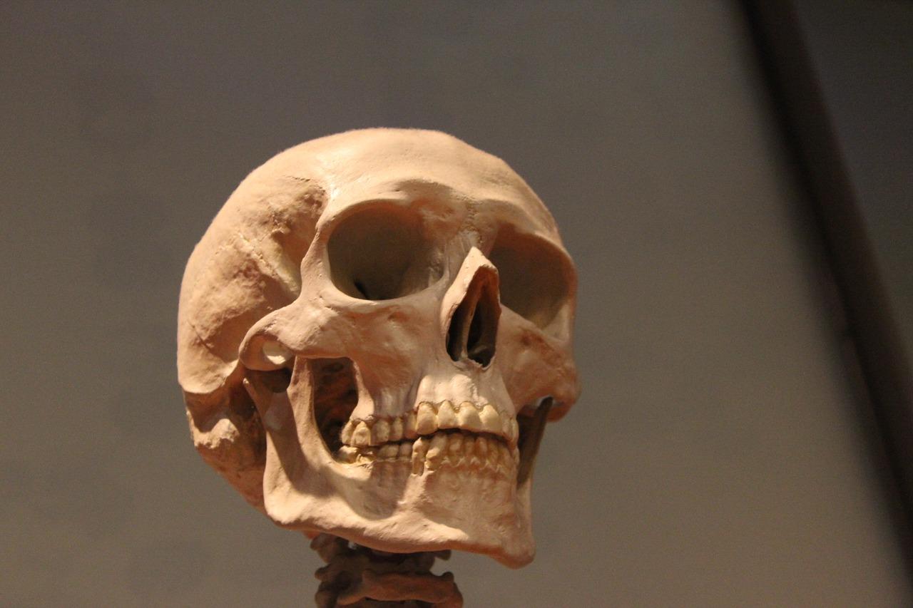 череп, человек, кость