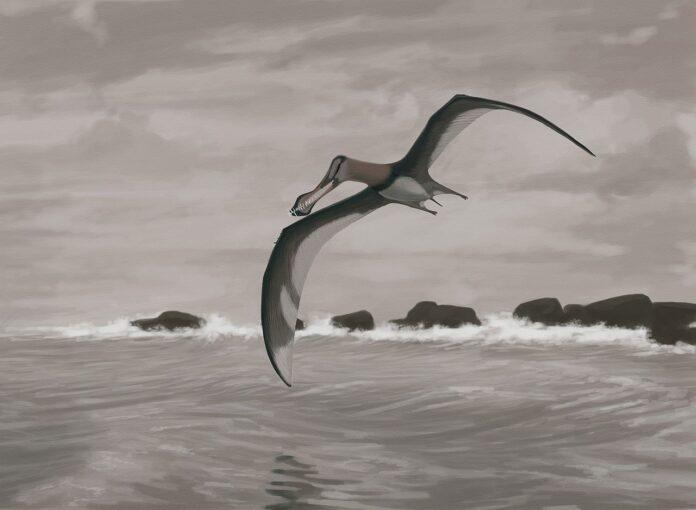 Птерозавр, динозавр