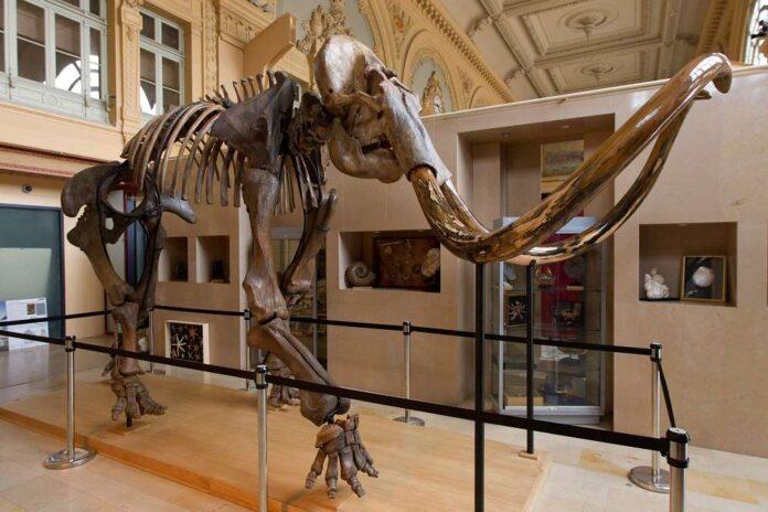 мамонт, скелет, аукцион