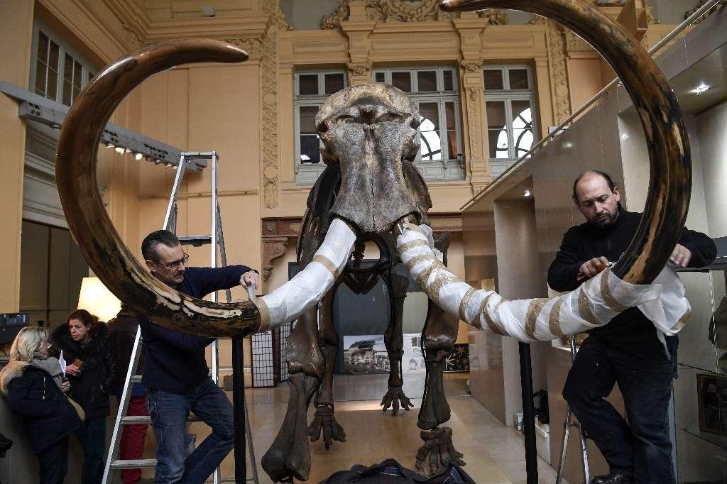 Во Франции продали гигантский скелет мамонта