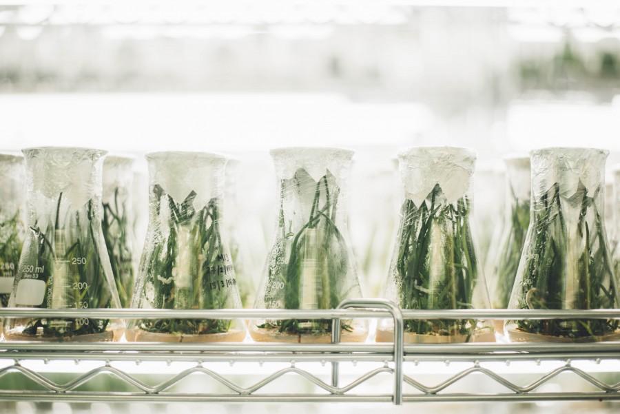 растение, наука, исследование