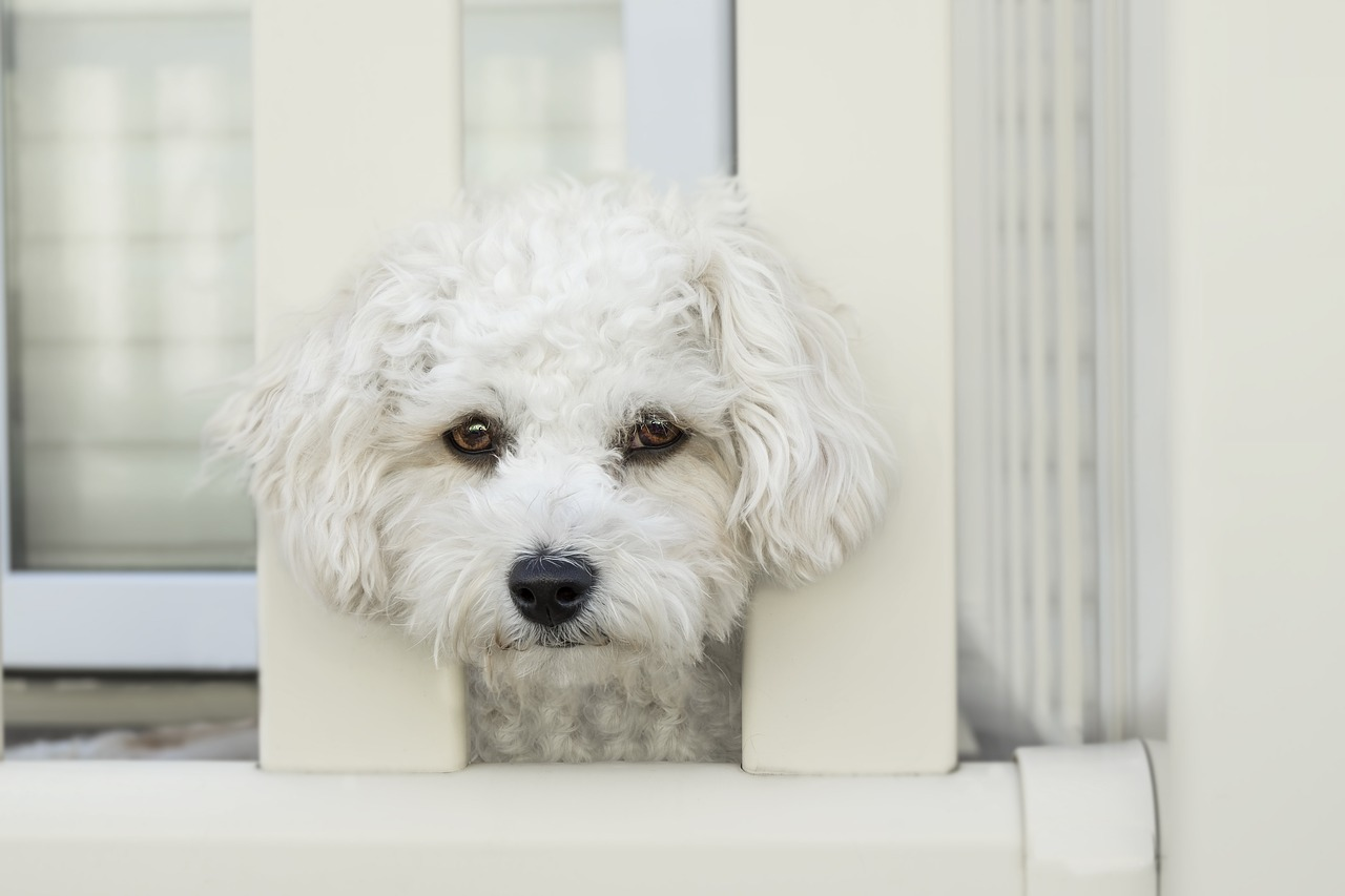 собака, забор, питомец