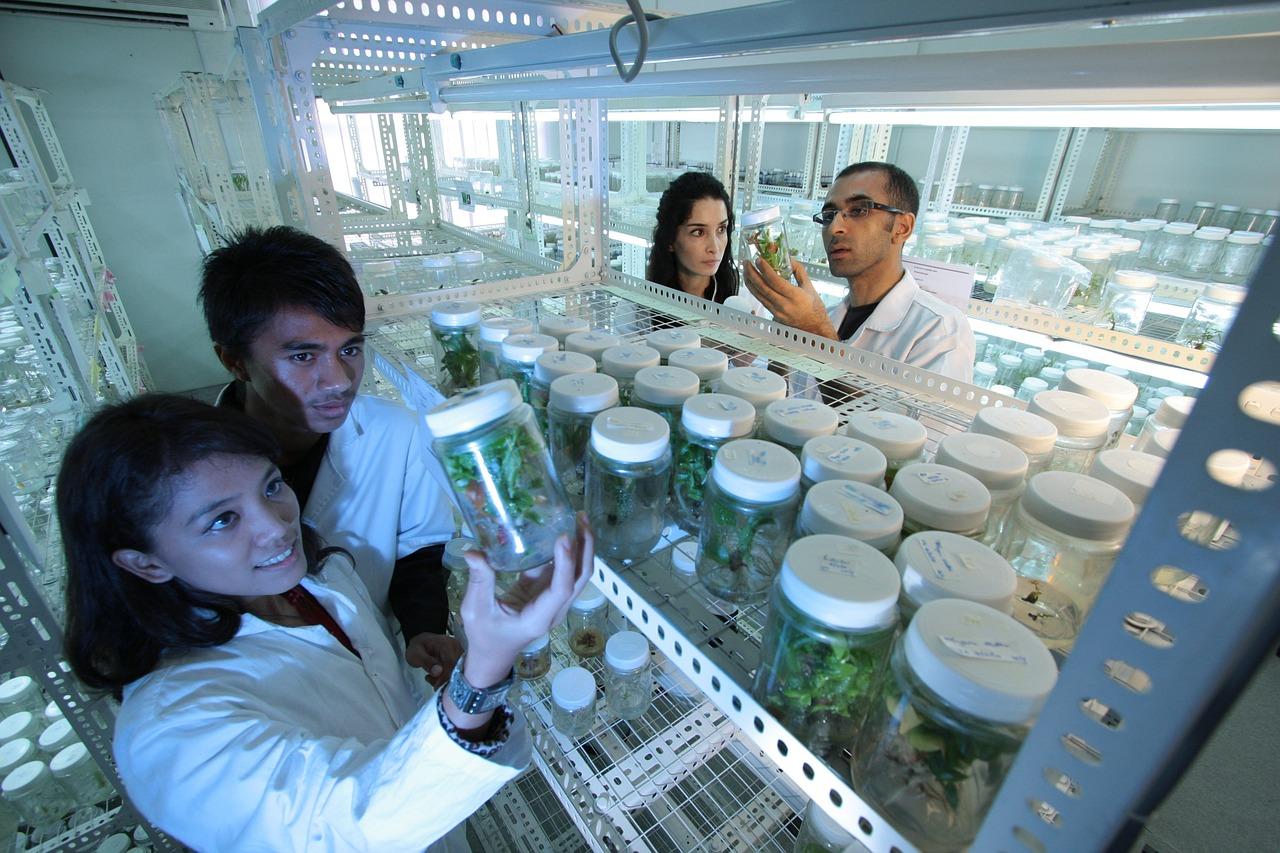ученые, наука, растения