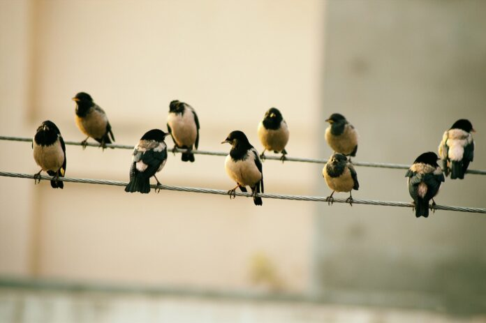 Птицы, еда, стая