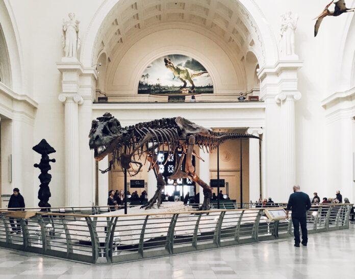 Динозавр, скелет, музей