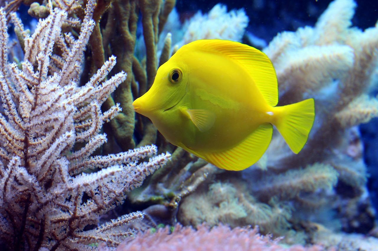 рыба, дайвинг, океан