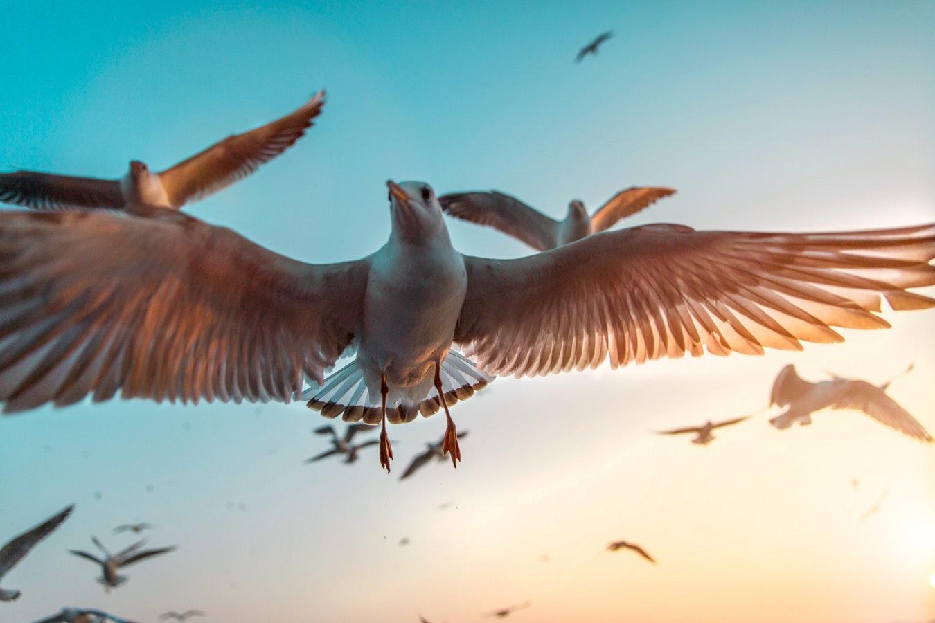 птицы, лететь