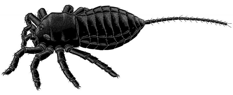 Ураранид, паук с хвостом