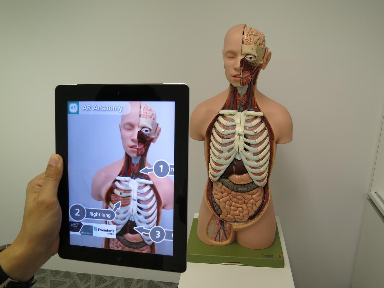анатомия, медицина, дополнительная реальность
