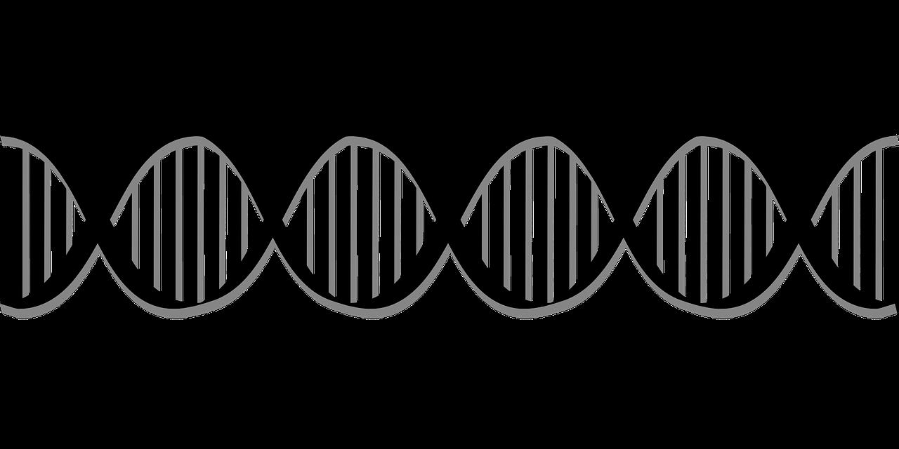 гены, биология, днк