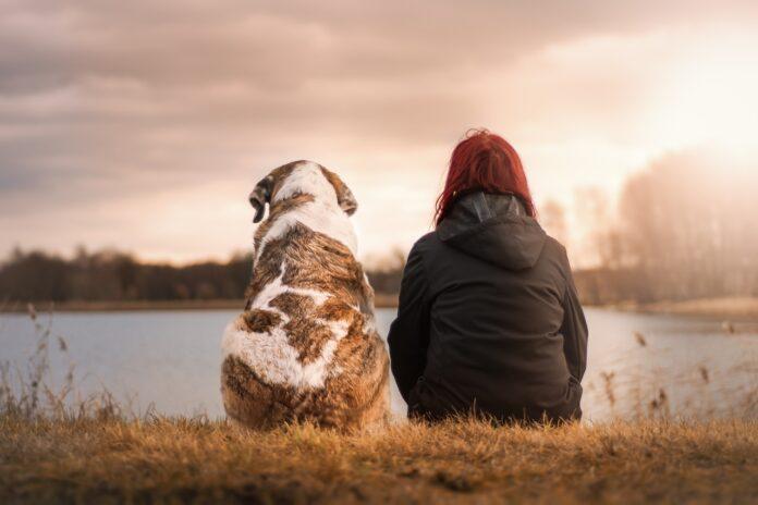 собака, человек, озеро