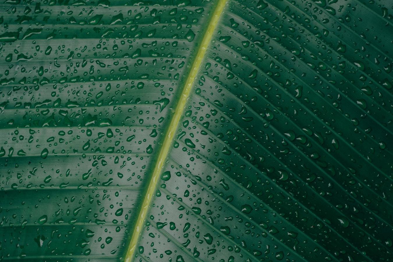Листья, влага, капли