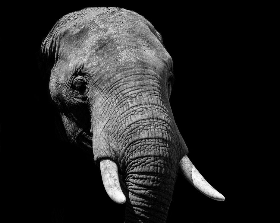 слон, хобот, черный