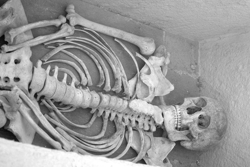 скелет, раскопки, археология
